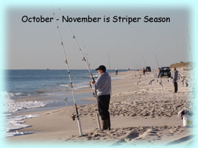 Surf fishing is very good off of our beach!